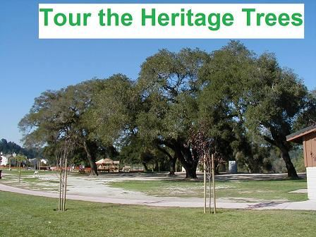Tour the Heritage Trees
